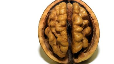 Photo of 8 Foods for the Brain