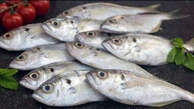 Photo of 9 Reasons why you Need to Eat More Fish