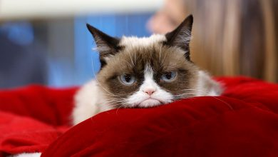 Photo of Grumpy Cat Dies