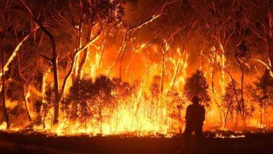 Photo of The Horrors in Australia